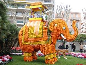 elephant en citron menton
