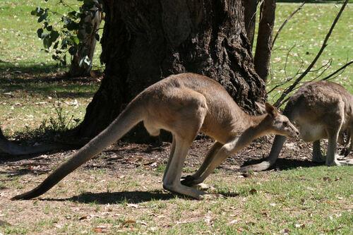 Mes derniers jours en Australie
