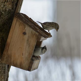 Le restaurant des oiseaux du jardin reste ouvert non stop