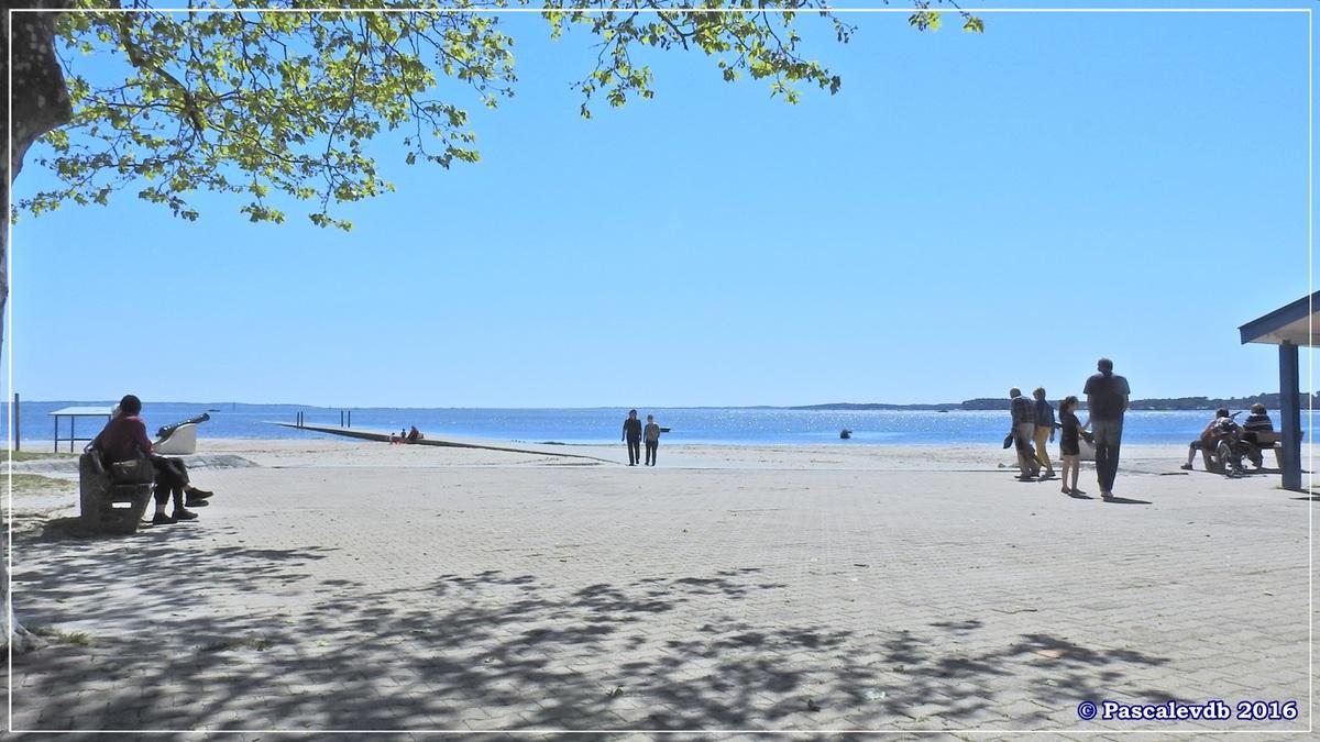 Du port ostréicole d'Andernos aux prés salés d'Arès - Mai 2016 - 2/9