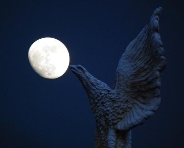 aigle-lune-bis.jpg