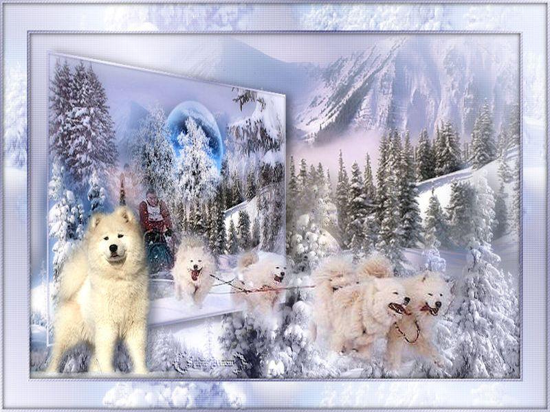 Cadres hiver 7