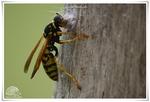Insectes variés