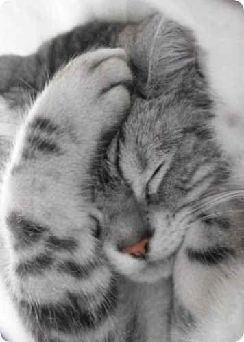 chaton mignon oublie quelquechose au supermarche