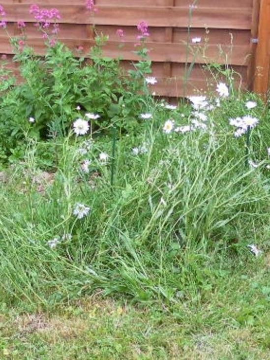 mon jardin le 20  mai