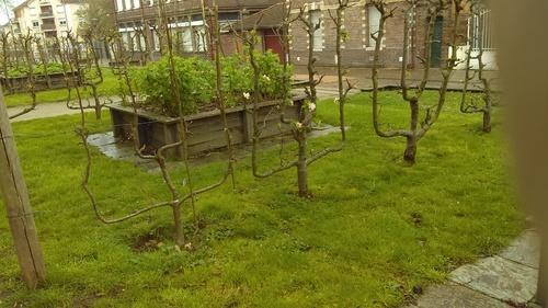 Un petit jardin d'écoliers