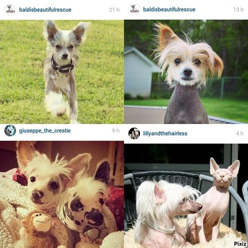 "Favoris | Instagram Mai 2015 "" Chien, merle & nu """