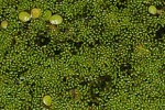 DES PLANTES TRES BIZARRES