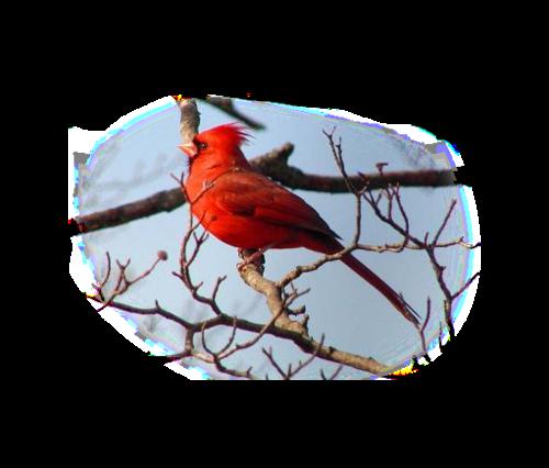 tubes noel / oiseaux