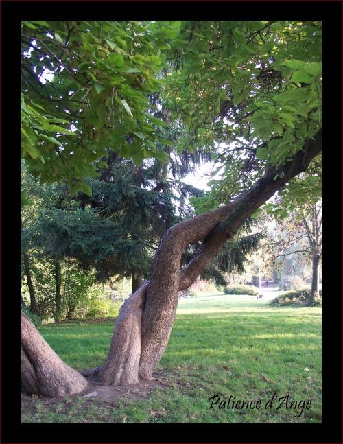 SAL Etude botanique avancées de septembre