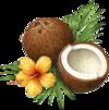 huile-noix-coco