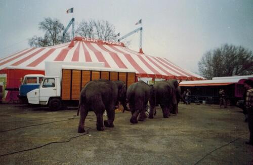 le cirque Jean Richard à Toulouse en 1980 ( archives Raymond Marti)