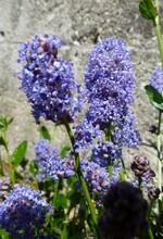floraisons de mai