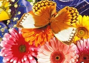 Hidden stars - Butterflies