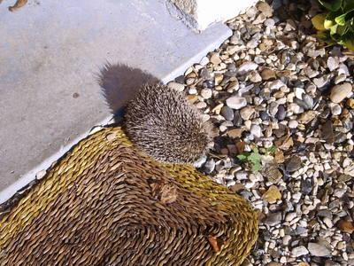 Blog de charlottopoire : Mes petites créas, Un petit visiteur dans mon jardin