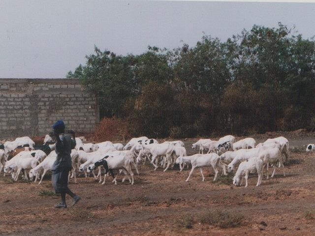 Afrique: le Sénégal -1
