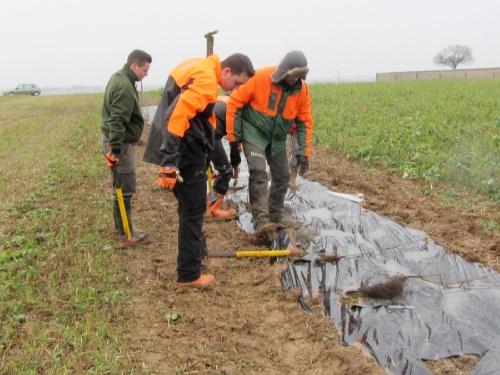 Plantation de haies brise-vent chez Dominique Lombaert à Sèche-Bouteille