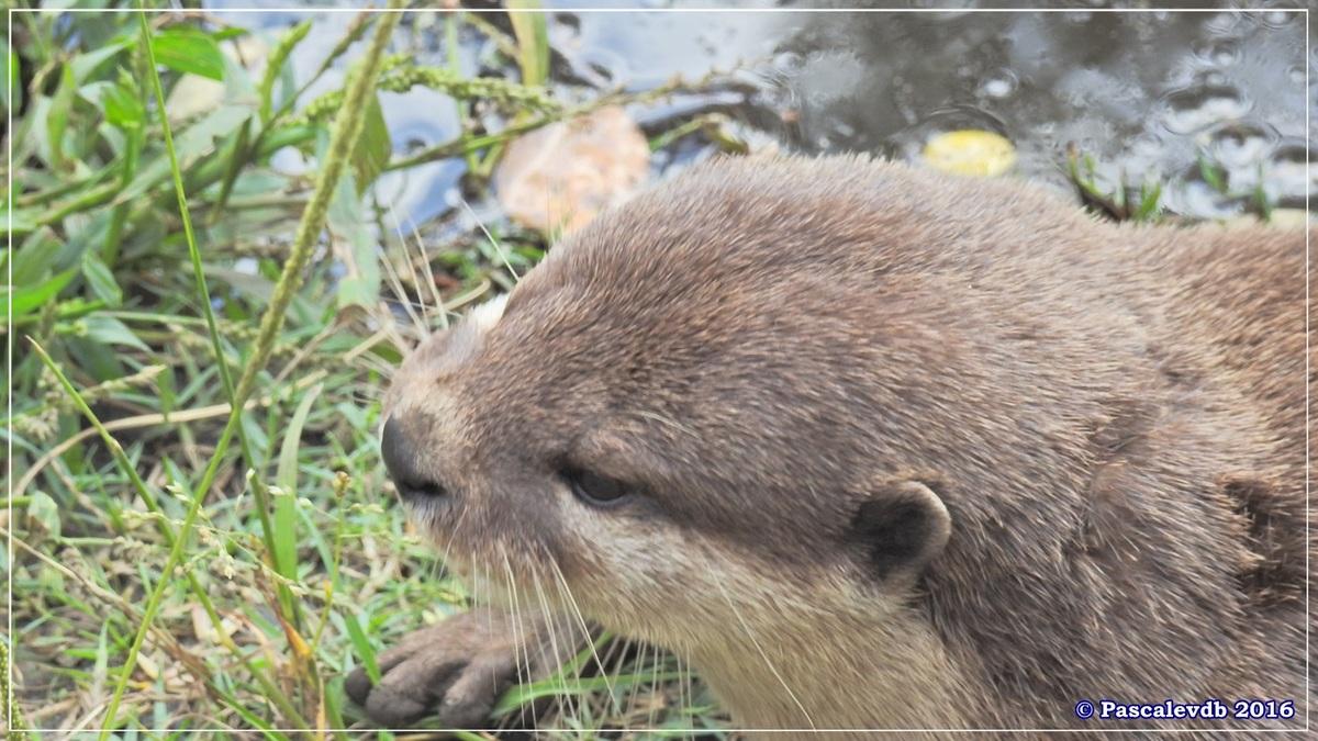 Zoo du Bassin d'Arcachon - Août 2016 - 13/15