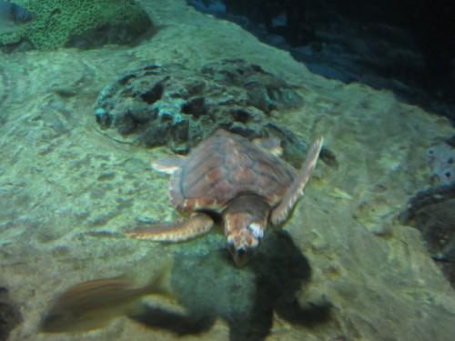 L'aquarium de Lisbonne - fin