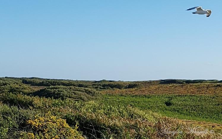 Bretagne : Pointe du Cap Fréhel 1/