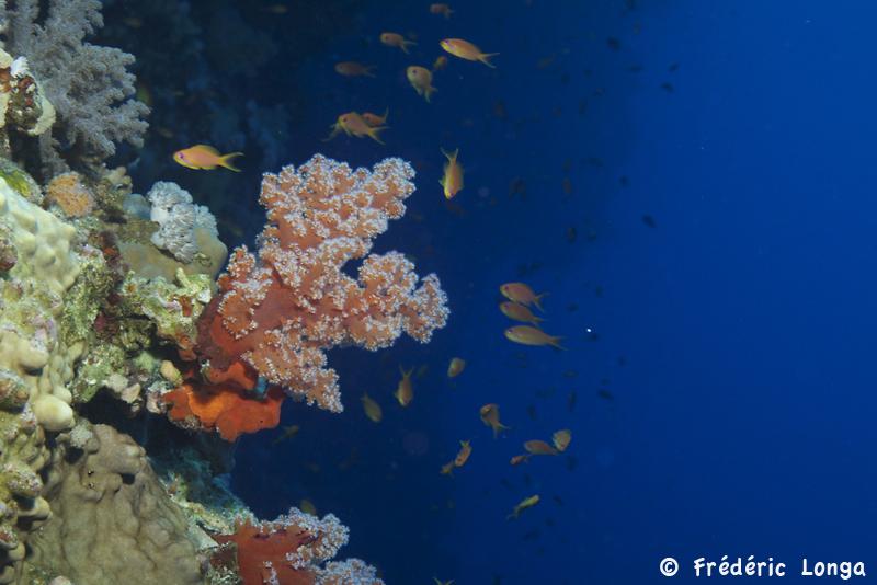 Mer Rouge