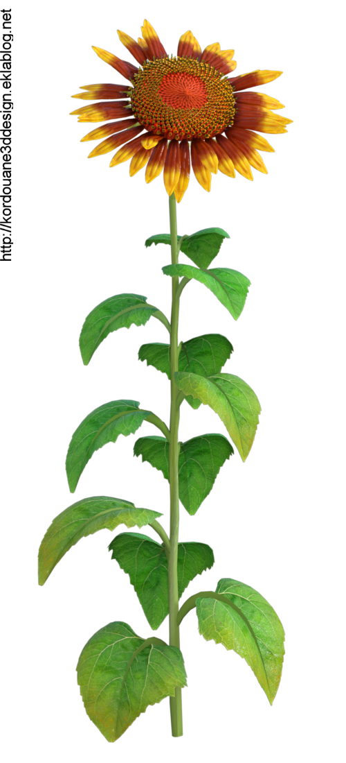 "Tube de fleurs ""tournesol"" (render-image)"