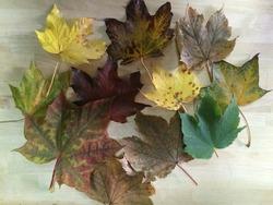 Sorcières en feuilles