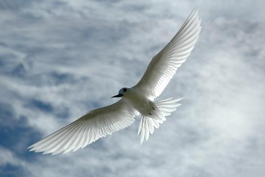 Transmutation..... à la recherche de la paix intérieure ..... ( 4 ) - Page 14 6Nqhl_cQnHB5UgO1ETEUsJw-QuM