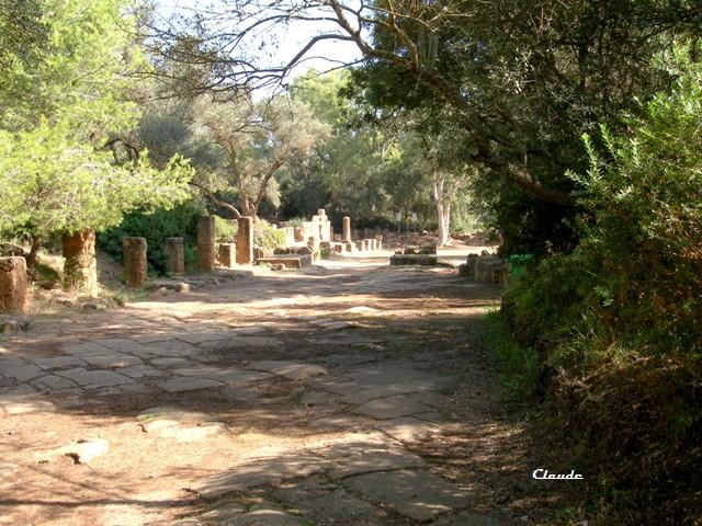 Sur les voies romaines à Tipasa