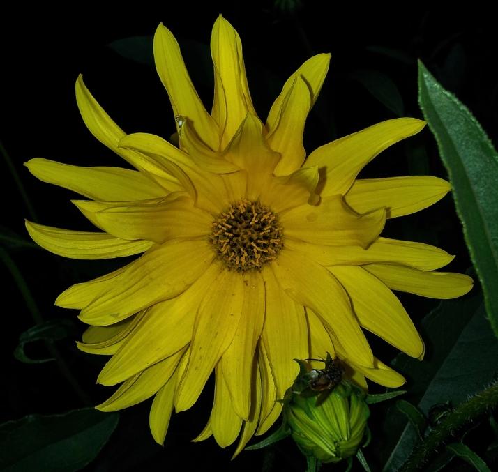 Fleurs en mélange au jardin