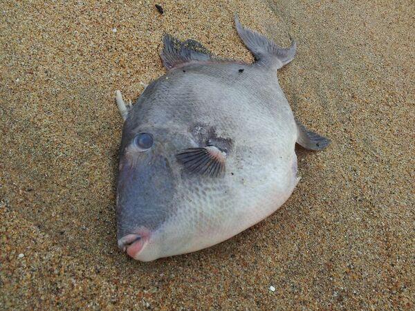 Echoué sur la plage