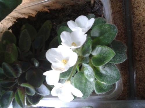 Mes plantes d'intérieur.
