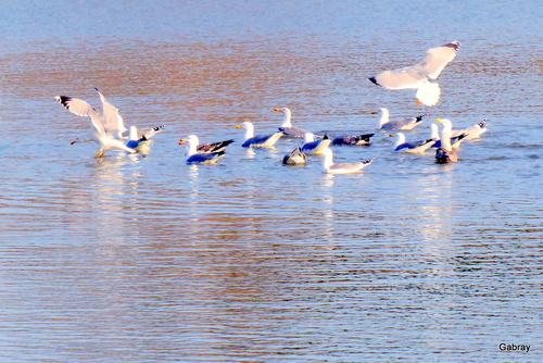 Oiseaux à l'embouchure de l'Agly