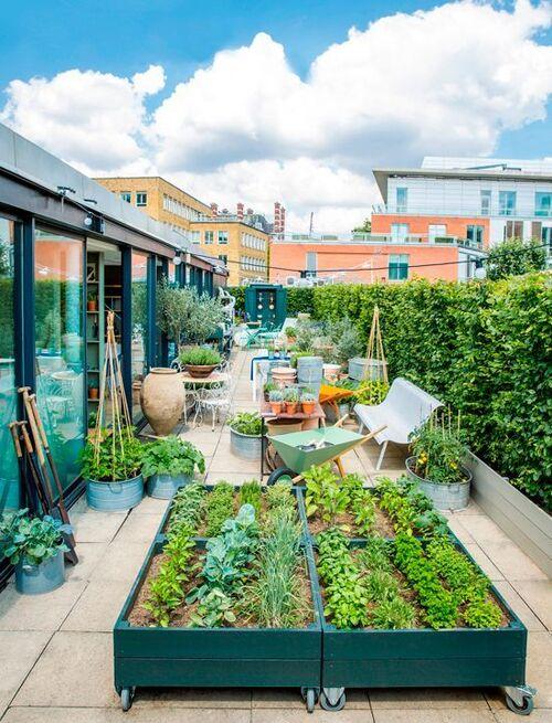 Géographie: l'architecture végétale