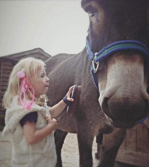 (-*♥*-) Un âne de thérapie et une fillette malade s'aident pour guérir (-*♥*-)