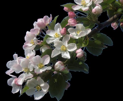 Tube virág