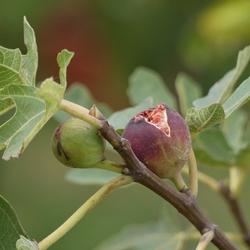 Journées des Plantes d'automne de Chantilly : le monde dans mon jardin, chapitre 5...
