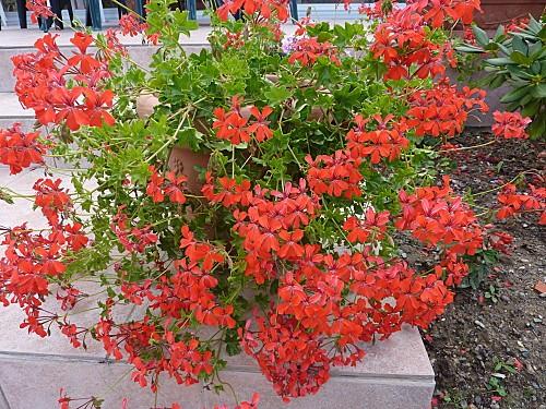 fleurs 8-9-2010 002