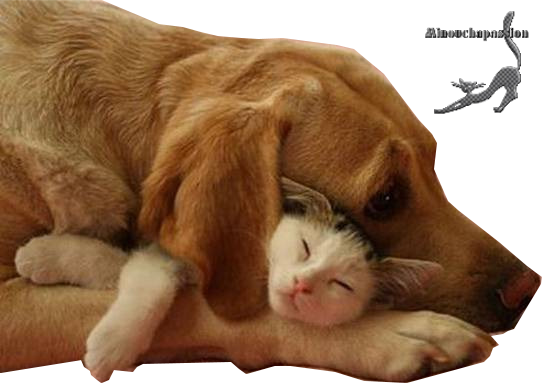 Tubes Animaux Amour en PNG