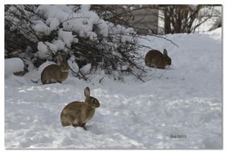 Les petits lapins sont de retour