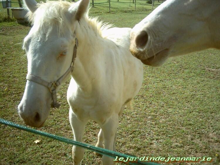 tendresse animale(des chevaux que nous allont voir bien souvent)