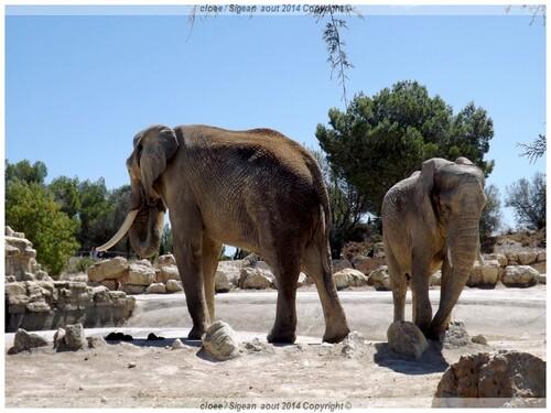 Réserve Africaine de SIGEAN ( Vacances 2014 a St Cyprien) suite n2