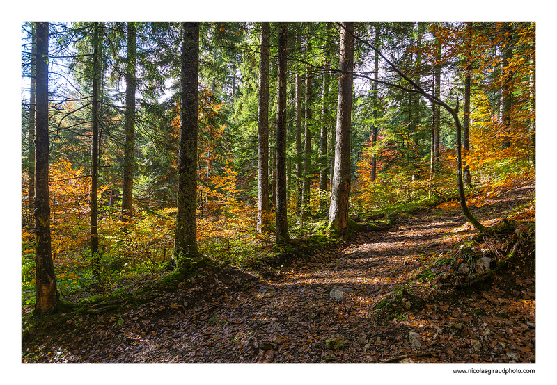 Pas de Rocheplane - Parc de la Chartreuse