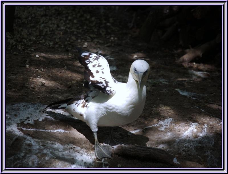 Le marais aux oiseaux à Dolus d'Oléron 3/3
