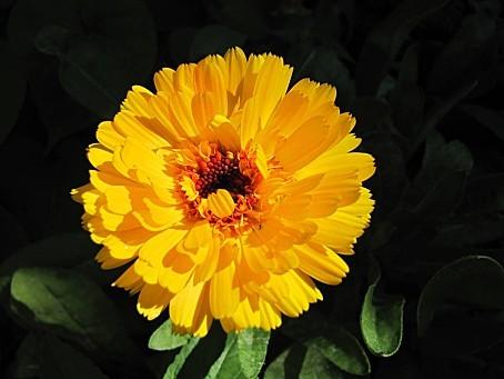 fleurs-6637.JPG