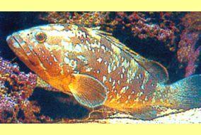 aquarium Banyuls