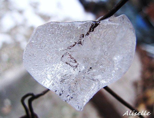 Coeur-de-glace--fevrier-2010-3.jpg