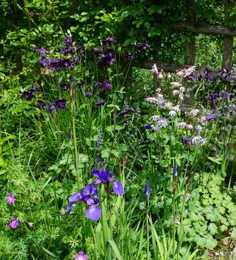 Douceur d'un après-midi dans le jardin de Monique