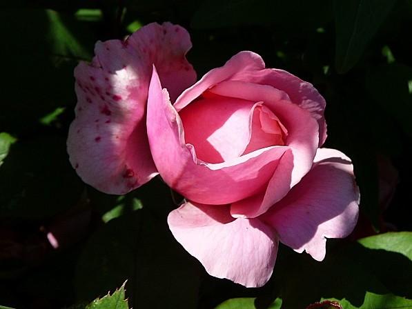 jardin-des-plantes-041.JPG