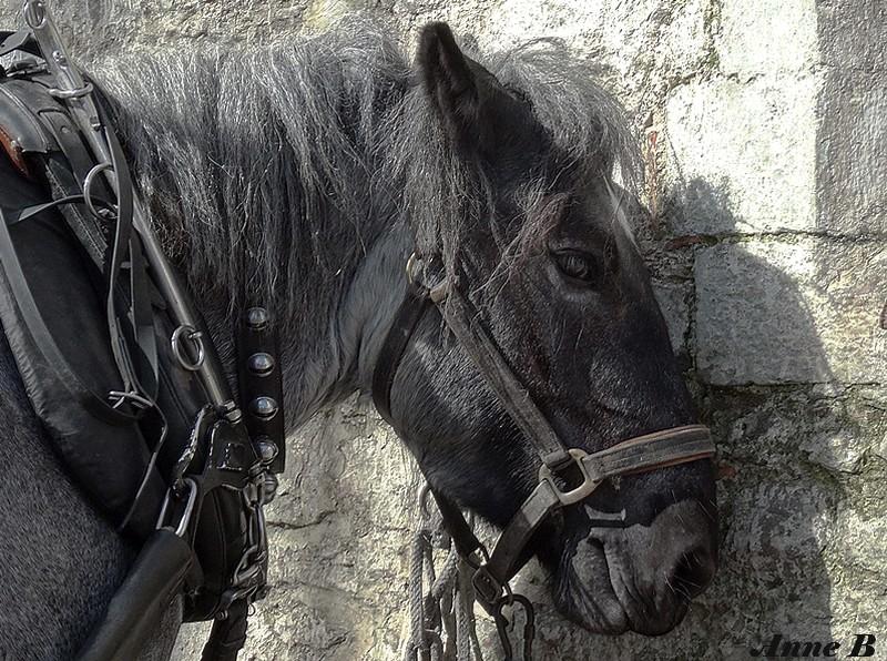 Il n'est pas de meilleurs maîtres que les chevaux, pour apprendre à contrôler nos émotions
